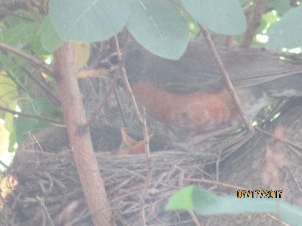 New additions to the nest (photo)